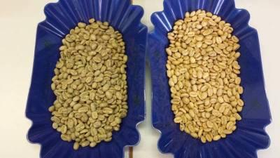 Erkennen der Sorte am Rohkaffee