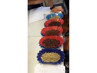 Kaffeebohnenvergleich von rohen und gerösteten Bohnen