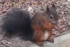 Patenschaft für Eichhörnchen übernimmt Zielpunkt im Tiergarten Schönbrunn