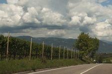 Den Weinen Südtirols auf der Spur